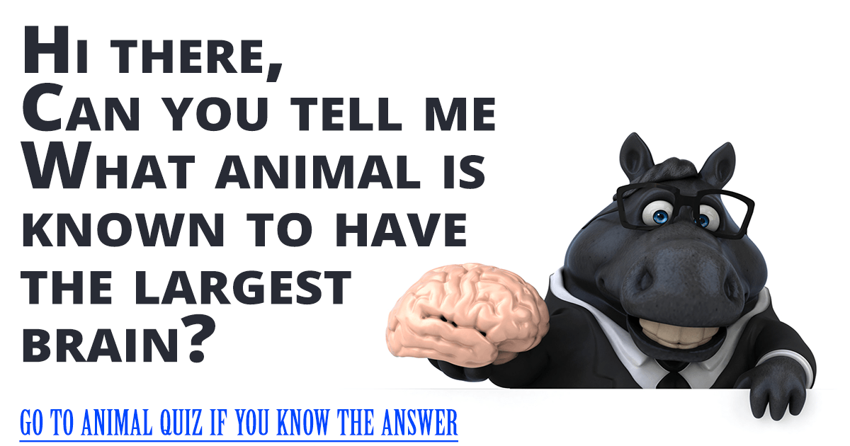 Hard Animal Quiz